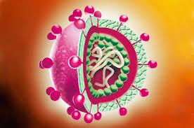 Вирусный гепатит А (ВГА)
