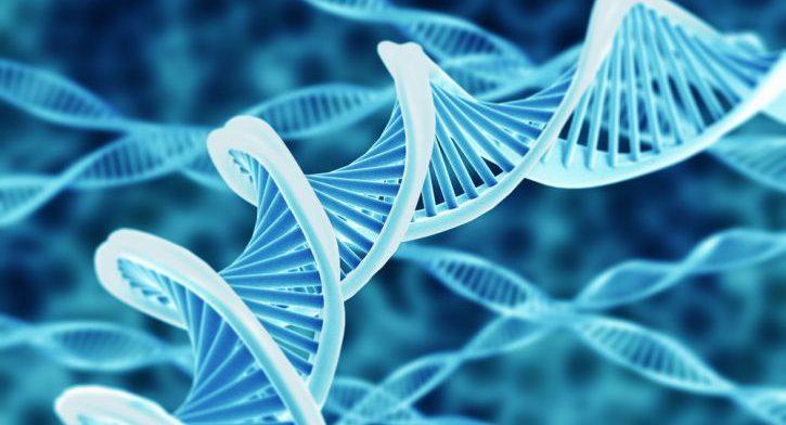 При голодании стволовые клетки восстанавливаются, показало исследование