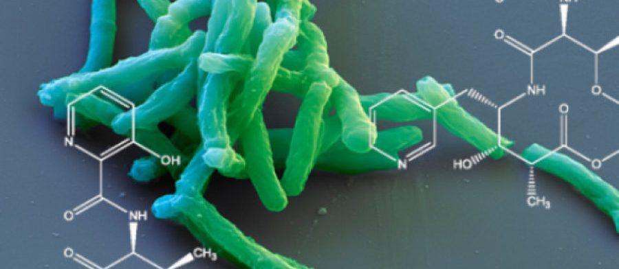 Туберкулез легких: симптомы должны настораживать