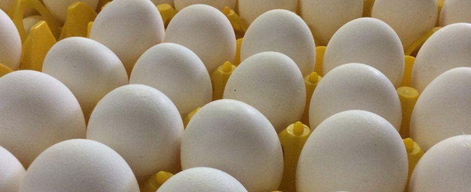 В Тверской области могут реализовываться яйца, инфицированные птичьим гриппом
