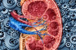 Лечение почечной гипертонии