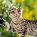 Студентка ХГУ изучила инфекции у кошачьих