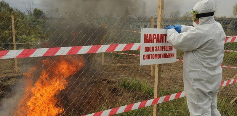 Из-за АЧС Омская область предложит ввести лимиты содержания свиней в личных хозяйствах