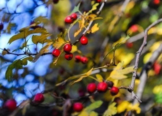 Как осенними ягодами укрепить иммунитет, рассказали волгоградцам