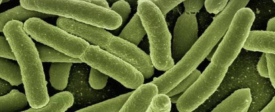 Бактерии в человеческом организме можно разделить на три группы