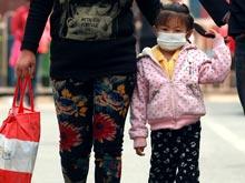 Пандемия птичьего гриппа угрожает населению всей Земли