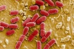 Слюна защищает пожилых людей от некоторых видов инфекции