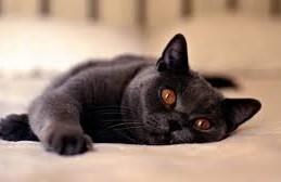 Кошки помогут разработать вакцину против ВИЧ