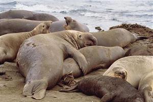 Тюлени стали переносчиками нового опасного вируса гриппа