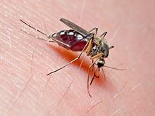 Исследователи узнали, каким образом укус москита приводит к опасным последствиям
