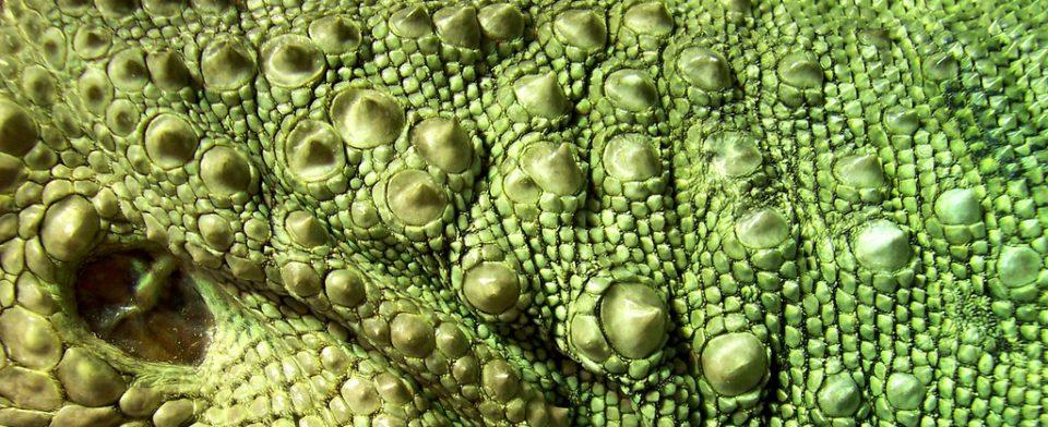 Мощное антибактериальное средство сделают из кожи лягушек