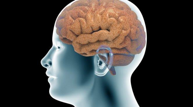 Связь, отвечающая за понимание других людей, формируется в мозге ребенка к 4 годам
