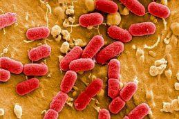 Вспышка больничной инфекции среди новорожденных в университетской больнице Тюбингена