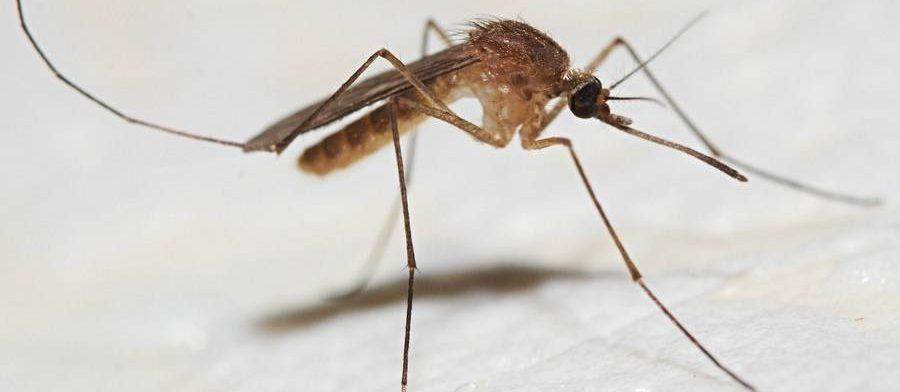 Ученые выяснили, как комариные укусы влияют на иммунитет