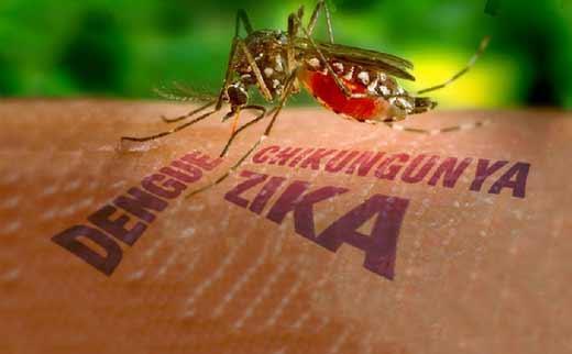 В Китае выявили новый случай заражения вирусом Зика