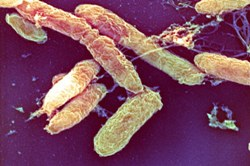 Туберкулёзная палочка опасно мутирует