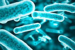 Модифицированный ванкомицин может помочь в борьбе с антибиотикорезистентностью