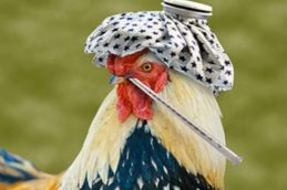 В Ульяновской области зафиксирована вспышка птичьего гриппа