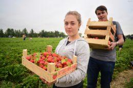 Питаемся летом правильно: полезные свойства овощей, грибов и ягод