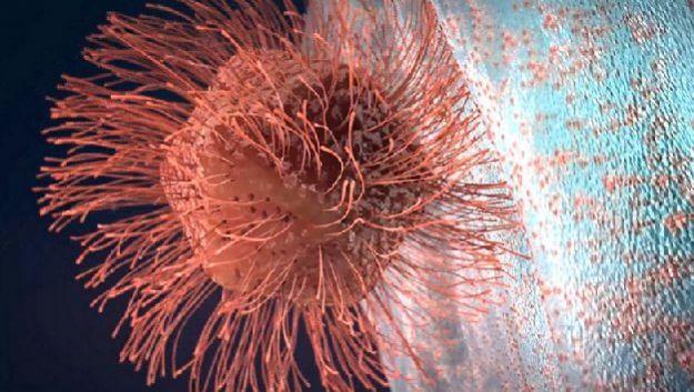 Обнаружен вирус-гигант