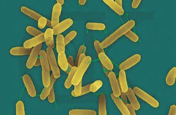 10 фактов о бактериальных инфекциях
