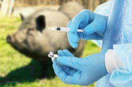 ВОЗ призывает прекратить использование антибиотиков среди здоровых животных