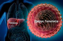 Пути передачи вирусных гепатитов: разъяснения Центра общественного здоровья