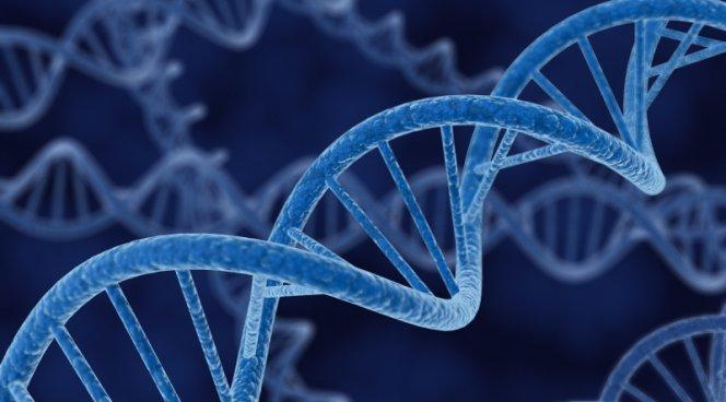 Вирус ВИЧ можно удалить из клеток с помощью фермента