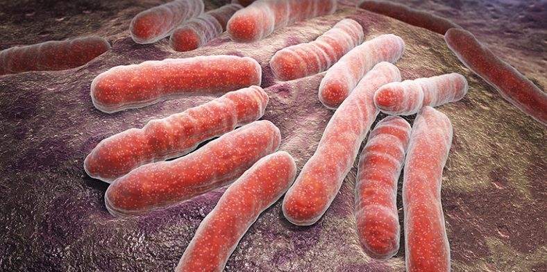 Петербургские ученые синтезировали эффективное против лекарственно устойчивых бактерий вещество