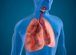 Профессиональные заболевания легких