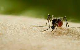 Революционный подход позволит остановить эпидемии тропических недугов