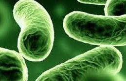 Ученые доказали, что младенцы защищены от инфекций