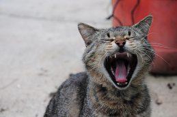 Женщина из Шумячей пострадала от бешеного домашнего кота