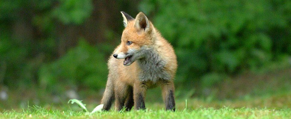 От укусов животных пострадала тысяча смолян