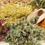 Травы для лечения болезней органов дыхания