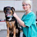 Дегельминтизация – что нужно знать каждому владельцу собаки