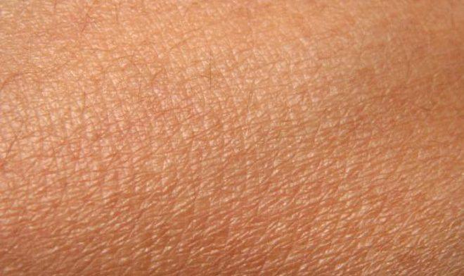 Кожа может регулировать кровяное давление и сердечные ритмы