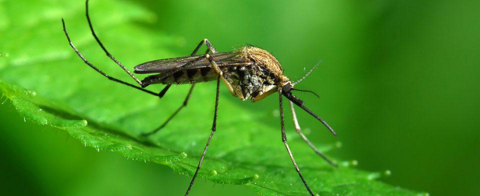 Ураган Харви грозит комариным бумом и всплеском инфекций