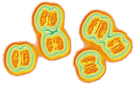 Вакцинация от менингококковой инфекции: что стоит знать