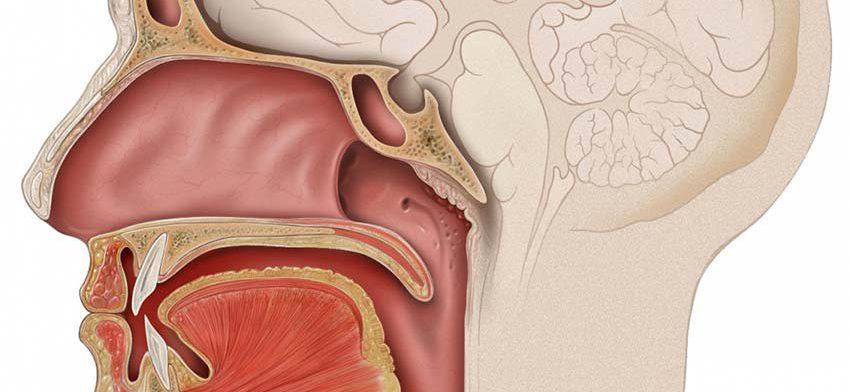 Болезни ротовой полости могут приводить к различным формам рака