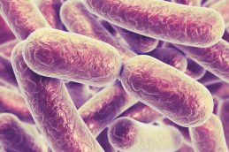 Устойчивые к ампициллину бактерии появились задолго до начала его применения
