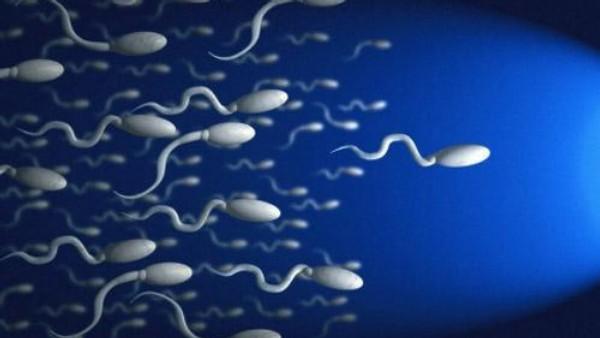Увеличение движения спермиев