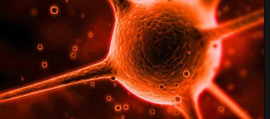 Вирусы »предпочитают» убивать мужчин, а не женщин