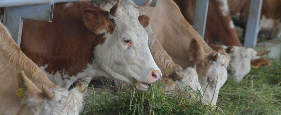 Россельхознадзор нашел глистогонное и антибиотики в продуктах двух фирм из Белоруссии