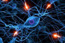 Зараженные 60 лет назад клетки могли испортить результаты 30 000 исследований